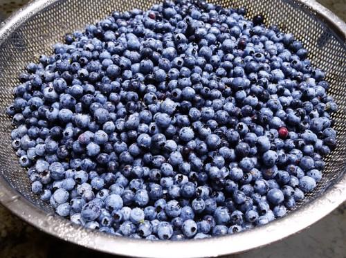 Blueberries in collander 5007 3 500x373